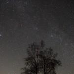 Milchstraße über dem Baum