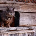 Katze im Holz