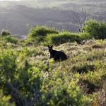 Wallaby im Sonnenlicht