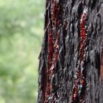Blutiger Baum