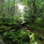 Green Sweden